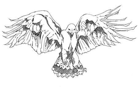 bird of prey: Hawk