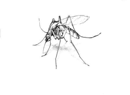 annoying: Mosquito