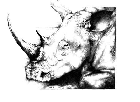 Rhinoceros close up Stock Photo