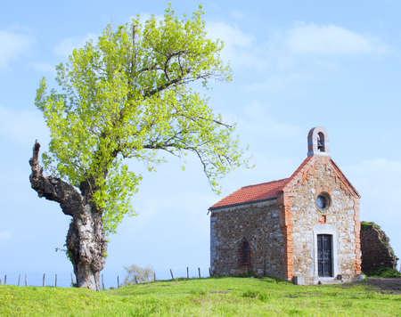 hermitage: Hermitage and tree