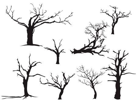 Dry Tree Dead Sécheresse Automne Automne Noir Silhouette