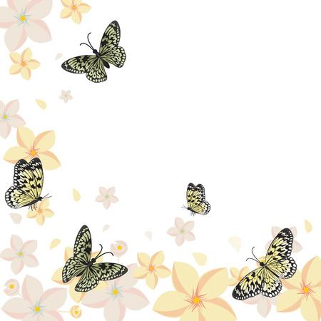 Butterflies Flower Floral Summer Spring Frame Background