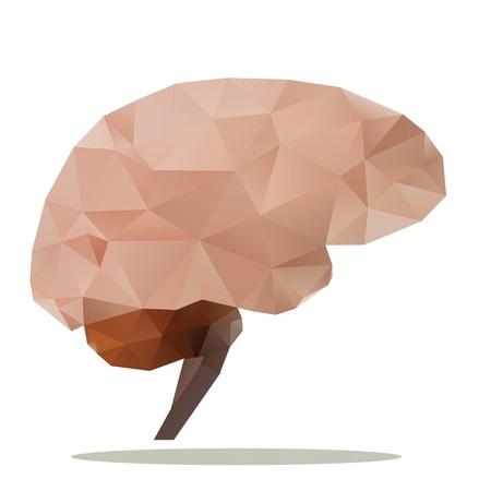 brain polygon Stock Photo - 21796163