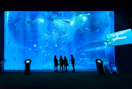 silhouettes of people against a big aquarium photo