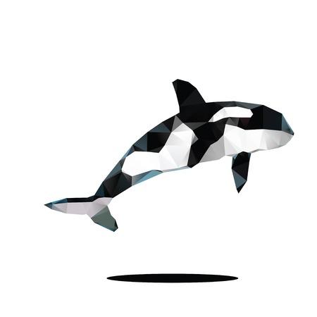 Killer whale whale photo