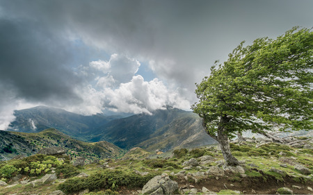 A windswept tree on a mountain ridge on the GR20 track in Corsica with dark cluds over distant mountains Stock Photo