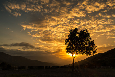 wispy: Lone Olive tree sillhoutted against a dramatic orange sunset and wispy clouds in the mountains of Corsica