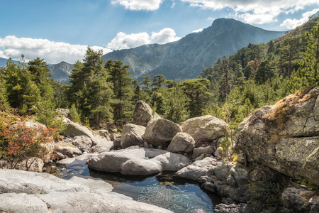Small stream cascading over rocks between pine trees in the mountains near Paglia Orba on the GR20 trail in Corsica