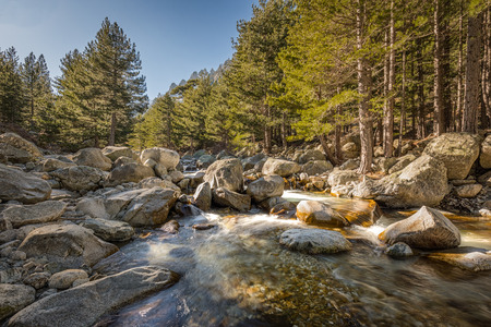 Crystal clear water cascading over boulders through the pine forest at Restonica near Corte in Corsica