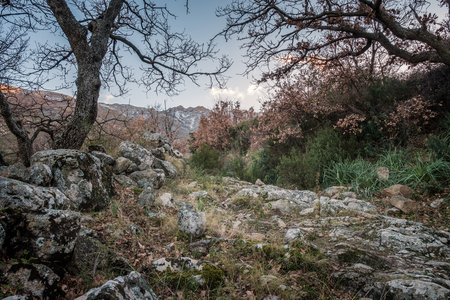 Rocky trail passing between trees in the hills of Corsica leading towards mountains dusted in snow Stock Photo