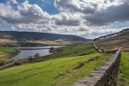 Sheep grazing in a field at the foot of Woodhead Pass in Derbyshire with a stone wall in the foreground and Woodhead reservoir and Woodhead bridge in the distance