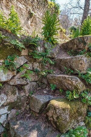 Ancient moss covered stone steps covered in ferns on a track in Corsica Banque d'images - 143488461