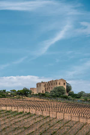 Freshly planted vineyards surround a derelict chateau near Calvi in Corsica