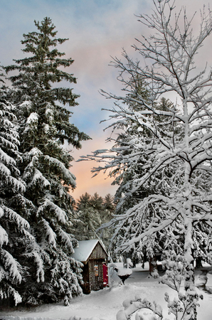 Snow covered country shed and pine trees in New England