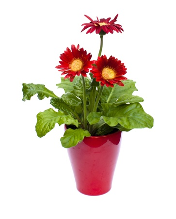 Isolated Red Potted Plant on a white background Stock Photo - 9819725