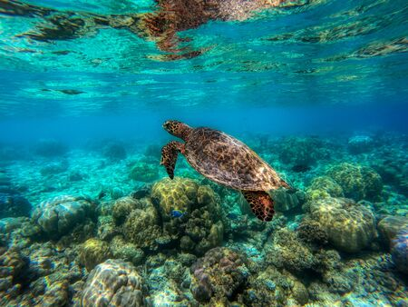 This unique photo shows an underwater turtle in the Indian Ocean! the picture was taken in the maldives! Foto de archivo