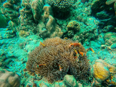 This unique photo shows the lively underwater world of the Maldives with anemones and fish.