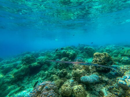 In this unique photo you can see the underwater world of the Pacific Ocean in the Maldives! Lots of coral and tropical fish!
