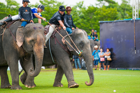mahout: Kings Cup Elephant Polo 2014 Bangkok at VR sports club. Unidentified polo players