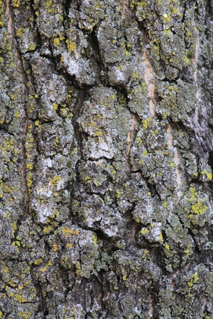 textual: A potential conceptualadvertisement backgroundtemplatedesign (mossy oak bark). Stock Photo