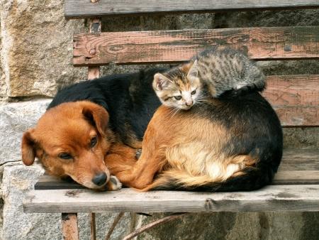 cane e di gatto e di riposo  Archivio Fotografico