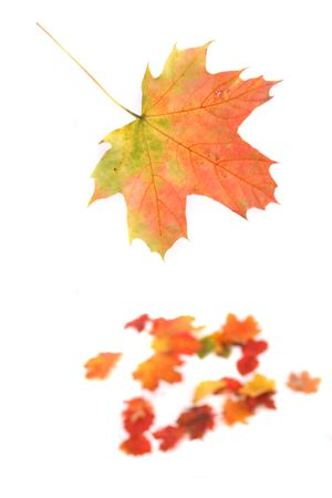autumn background from color (red yellow and green) leaves Stock Photo - 1830786
