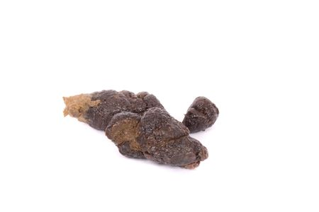 crap: poo from dog Stock Photo