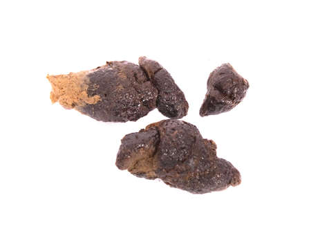 poo from dog Stock Photo
