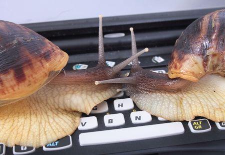 big brown snails on the black keyboard photo