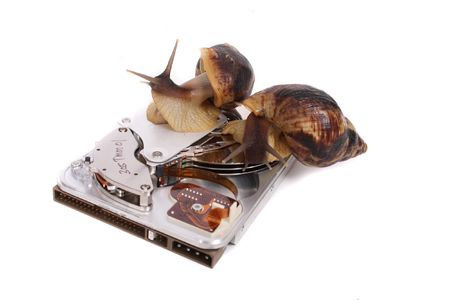 big brown snails on the hard disc  photo