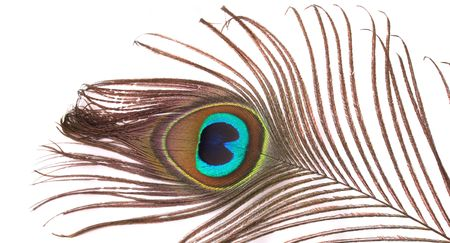 peacock eye: color feather of the peacock on the white background Stock Photo