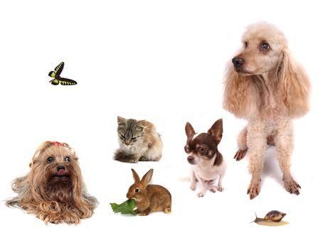 cat mariposa perros de conejo y caracoles en el fondo blanco