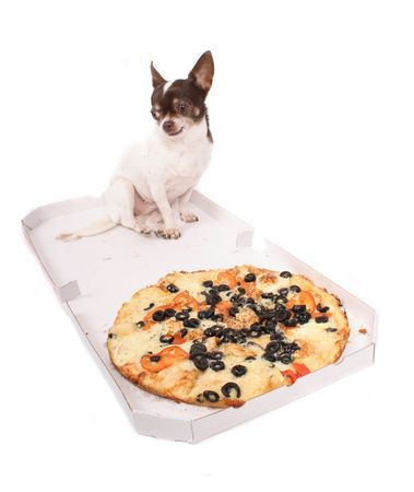 fidelity: chihuahua and the pizza on the white background