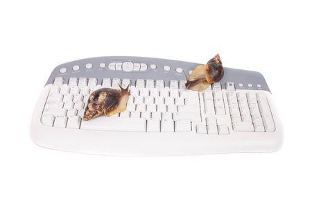 nice big snail on the white keyboard photo