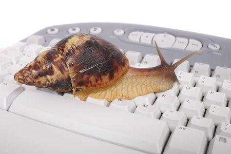 sluggish: nice big snail on the white keyboard