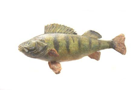 exotic fish on the white background Stock Photo - 3460990