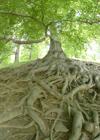 very old exotic tree from the czech forest
