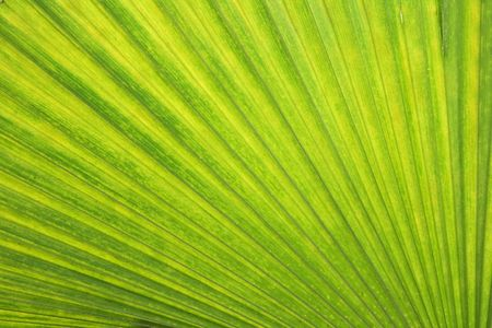 green background from the tropical forest photo