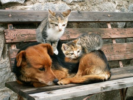 two young cats and dog are friends Stock Photo