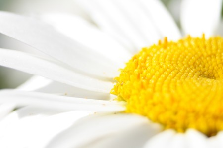 very nice flower background with white and yellow color Stock Photo - 4029563