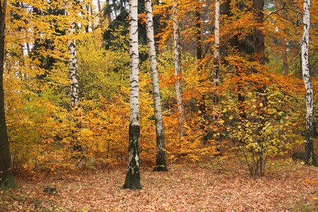 color autumn forest from the czech republic  Stock Photo - 4043494