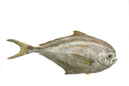 big exotic fish on the white background Stock Photo - 4043424