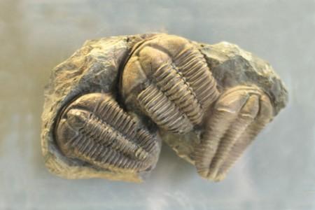 trilobyte background