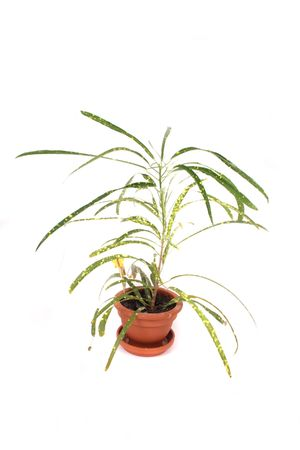 small green palm on the white background photo
