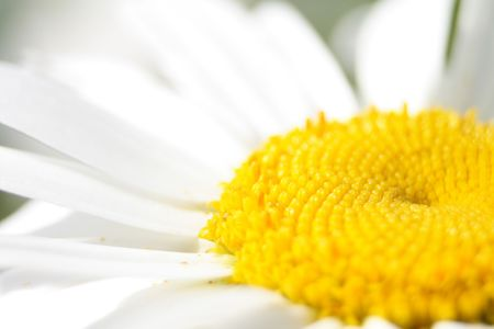 detail of white flower as natural background Stock Photo - 4883749