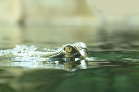 skin diving: green head with eyes from the crocodile
