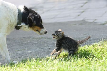 surprised dog: cat and dog (dog want to be friend)