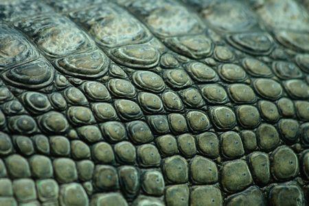 green crocodile skin from the Prague ZOO Stock Photo