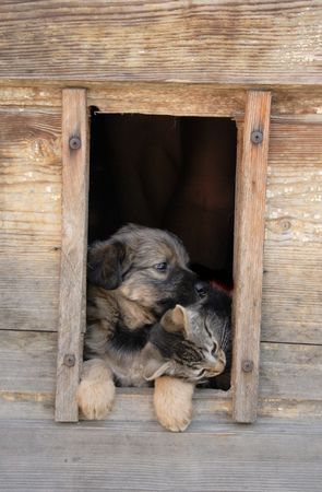 surprised dog: cat and dog together in their house Stock Photo