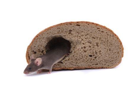 mouse e la sua casa di pane isolato su sfondo bianco